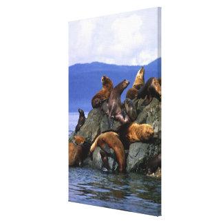 Stellar sea lions Alaska; USA Canvas Print