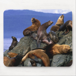 Stellar sea lions Alaska; USA Mouse Pad