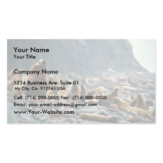 Stellar sea lions on Buldir Island Business Cards