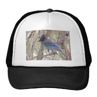 Stellars Jay Trucker Hat