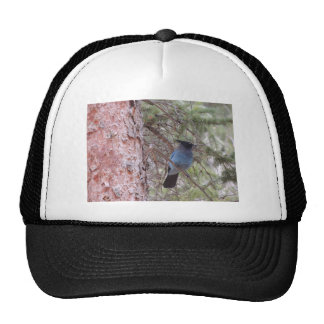 Stellars Jay Mesh Hat