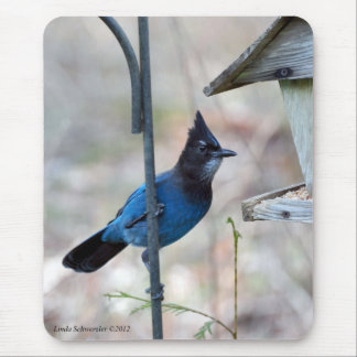 Stellar's Jay Mouse Pad