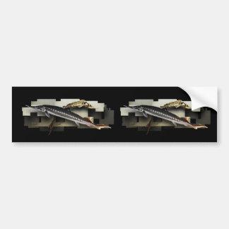 Stellate Sturgeon 3D Collage Car Bumper Sticker