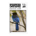 Steller Jay, Grand Canyon Postage Stamp
