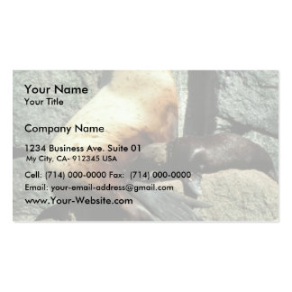 Steller Sea Lion and Pup Business Card Template