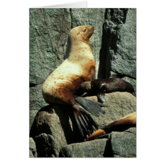 Steller Sea Lion and Pup Greeting Card