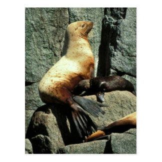 Steller Sea Lion and Pup Postcards