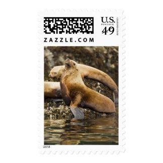Steller sea lion at shoreline postage