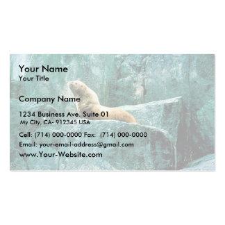 Steller Sea Lion Business Card