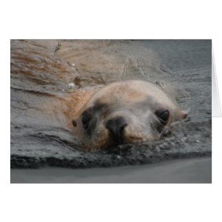 Steller Sea Lion Card