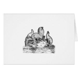 Steller Sea Lion Cards