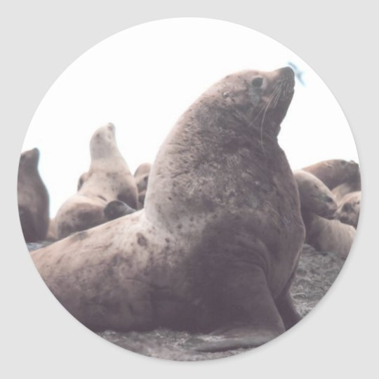 Steller Sea Lion Classic Round Sticker