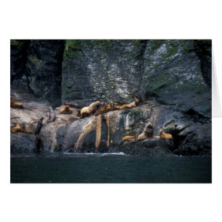 Steller Sea Lion Haulout in the Aleutian Islands Greeting Cards