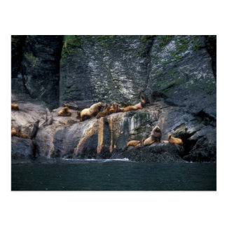 Steller Sea Lion Haulout in the Aleutian Islands Post Cards