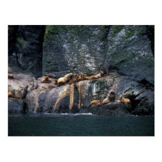 Steller Sea Lion Haulout in the Aleutian Islands Postcard