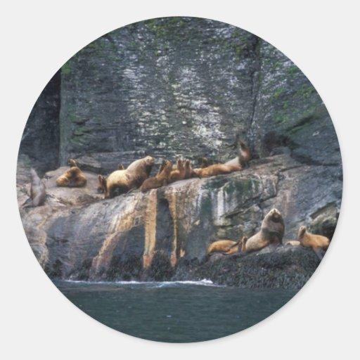 Steller Sea Lion Haulout in the Aleutian Islands Classic Round Sticker