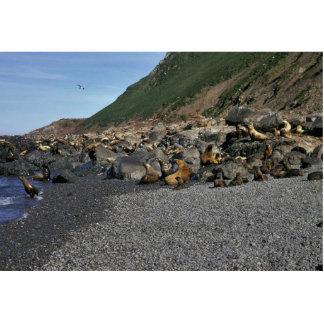 Steller Sea Lion Cut Outs