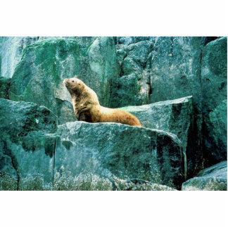 Steller Sea Lion Cut Out