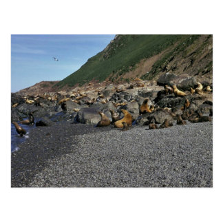 Steller Sea Lion Postcards