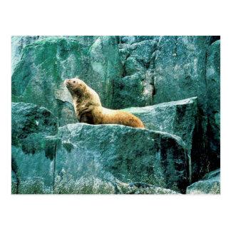 Steller Sea Lion Post Cards