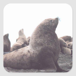 Steller Sea Lion Square Sticker