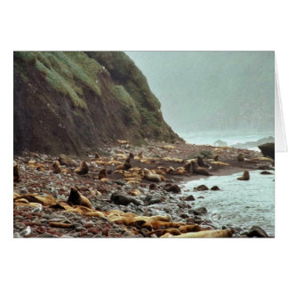 Steller Sea Lions at Haulout Greeting Cards