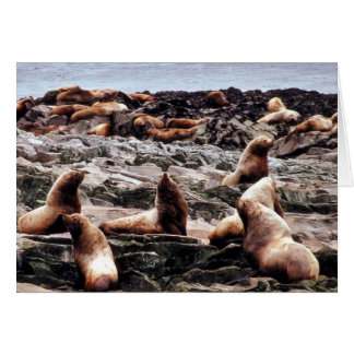 Steller Sea Lions at Haulout Greeting Card
