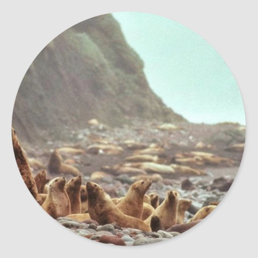 Steller Sea Lions at Haulout Classic Round Sticker