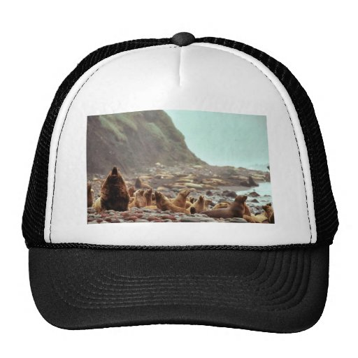 Steller Sea Lions at Haulout Hats