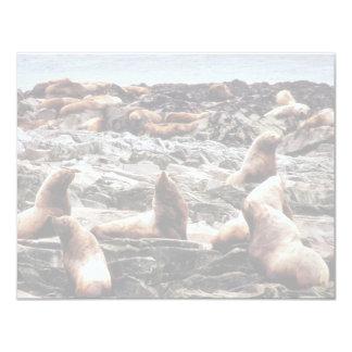 Steller Sea Lions at Haulout Announcement