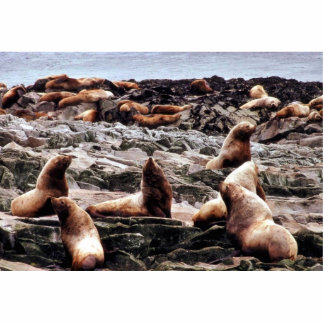 Steller Sea Lions at Haulout Photo Cutouts