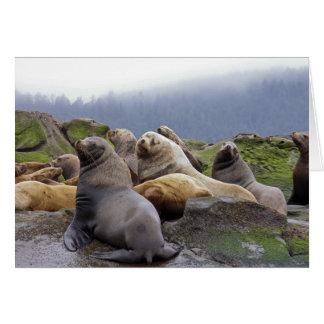 Steller Sea Lions Greeting Card