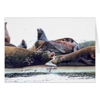 Steller Sea Lions Greeting Cards