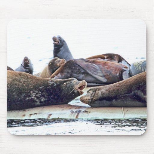 Steller Sea Lions Mouse Pad