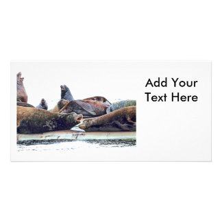 Steller Sea Lions Personalized Photo Card