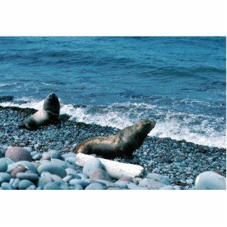 Steller Sea Lions Photo Cutout