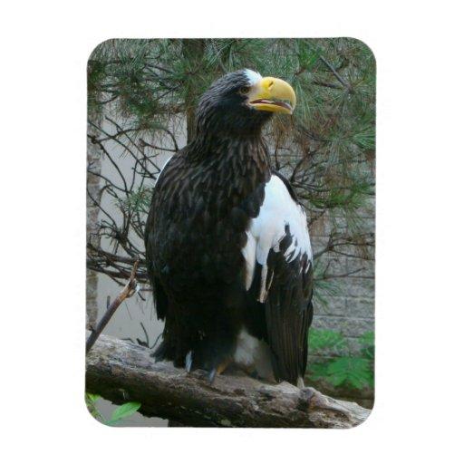 Stellers Eagle Flexible Magnet