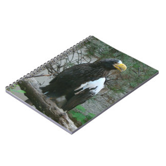 Stellers Eagle Notebook