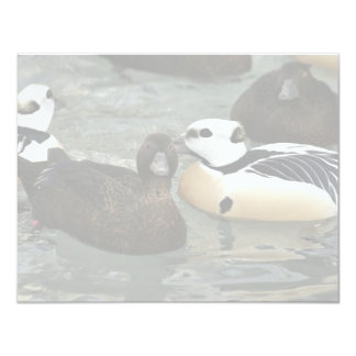 Steller's Eider Males and Females Personalized Invitations