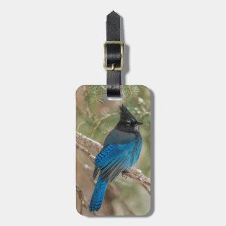 Steller's jay bird in tree bag tag