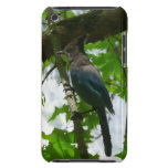 Steller's Jay Blue and Black Bird iPod Touch Cover