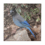 "Steller&#39;s Jay Ceramic Tile<br><div class=""desc"">A Photo of a Steller&#39;s Jay perched on a rock.</div>"