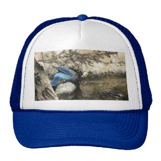 Steller's Jay Mesh Hat