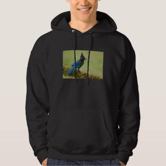 Steller's jay hoodie