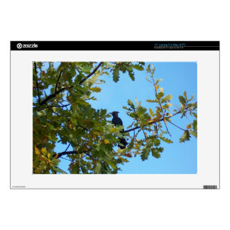 Steller's Jay in Oak Tree Decal For Laptop