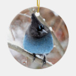 Steller's Jay in Snow Christmas Ornament