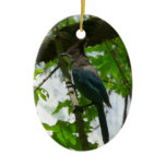 Steller's Jay in Yosemite National Park Ceramic Ornament