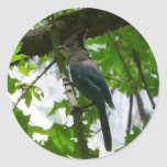 Steller's Jay in Yosemite National Park Classic Round Sticker