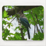 Steller's Jay in Yosemite National Park Mouse Pad