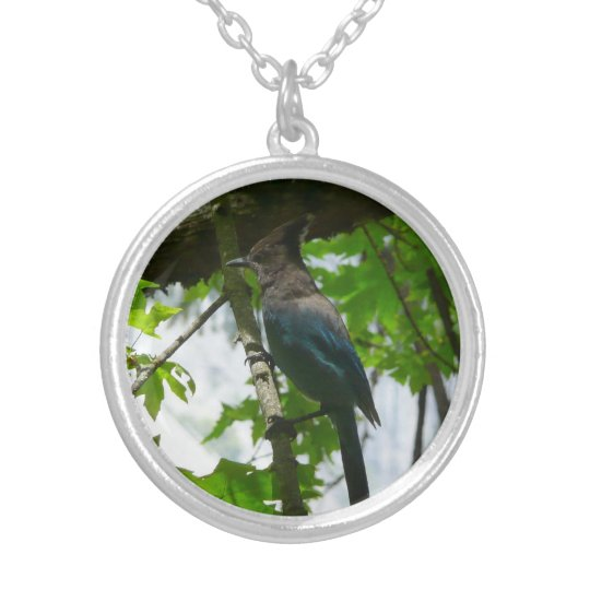 Steller's Jay in Yosemite National Park Silver Plated Necklace